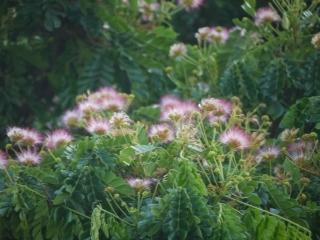 この木花.jpg